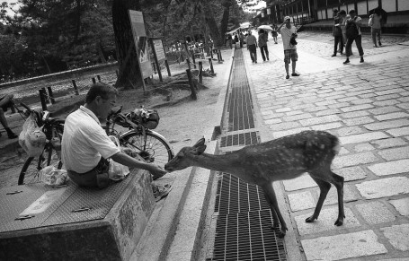 Man Feeding Deer, Nara.