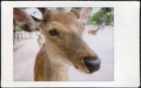 Deer, Nara.