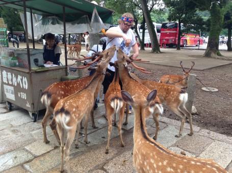 Ben feeding the deer at Todaiji Temple