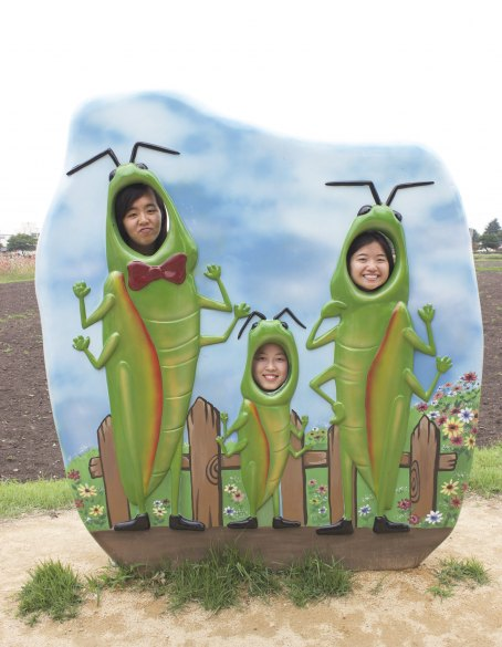 Just your typical family of grasshoppers!