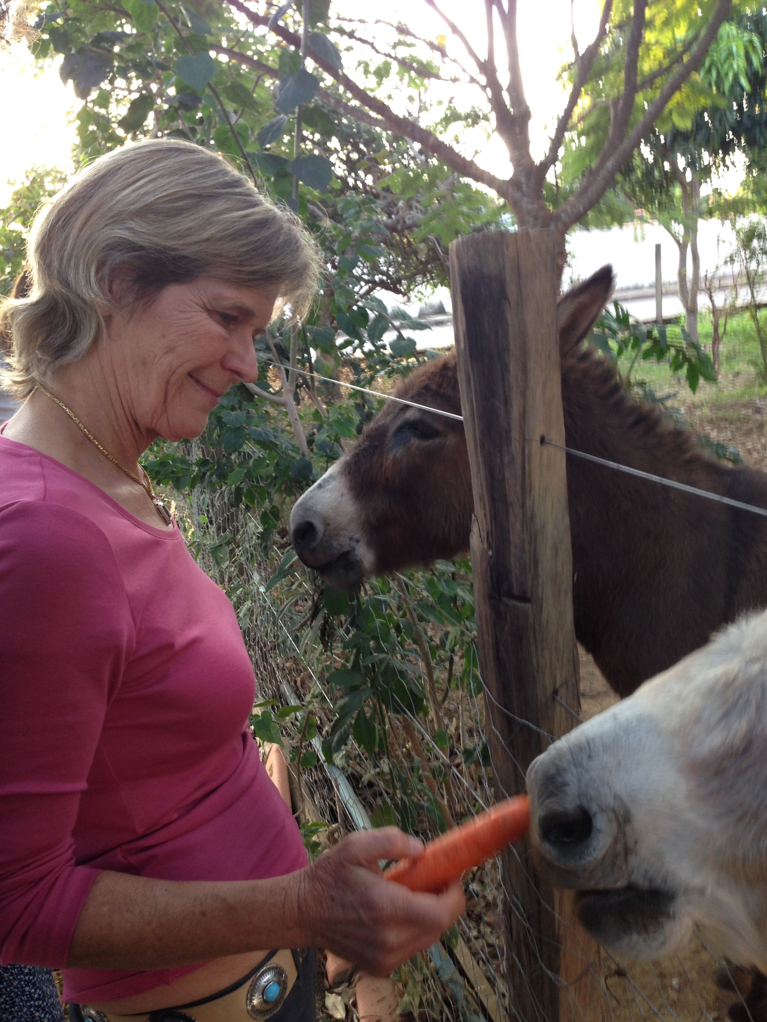 Heather Cumming feeding her donkey