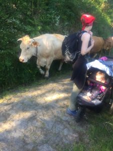 Cows on the Camino. A pilgrim pushes her 2 year old along the path.