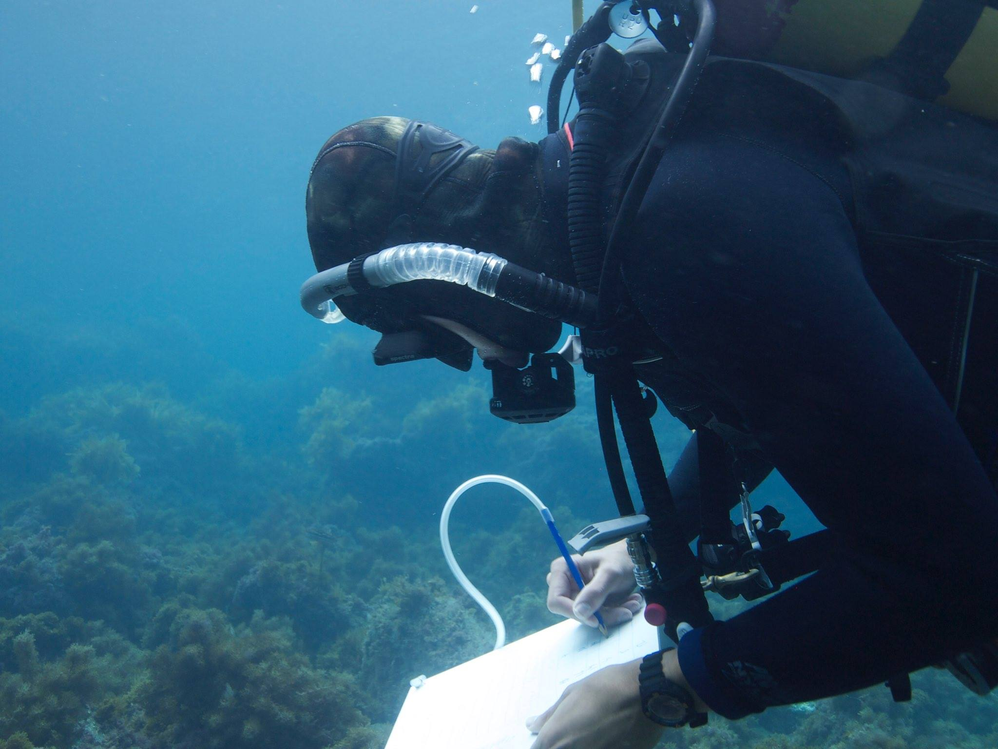 Carr Diver