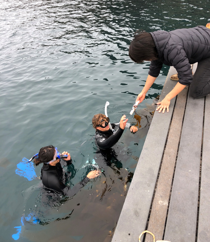 My research partner, Tristan Jordan-Huffman, and I out planting some juvenile kelp into Big Fisherman's Cove with the help of our mentor Diane Kim.